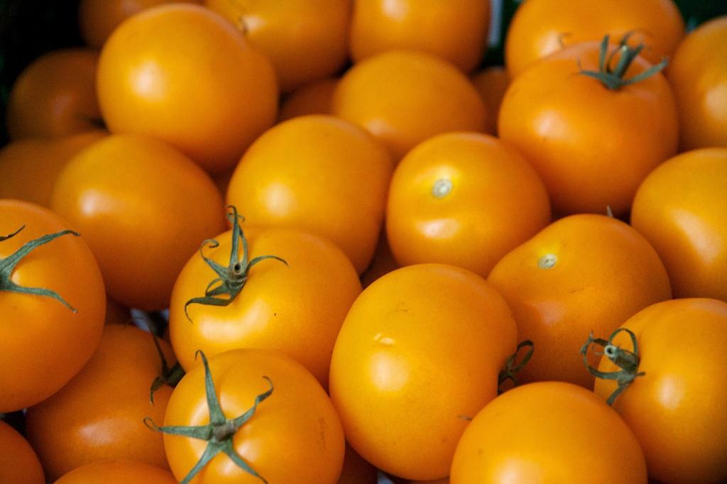Tomaten_Auriga