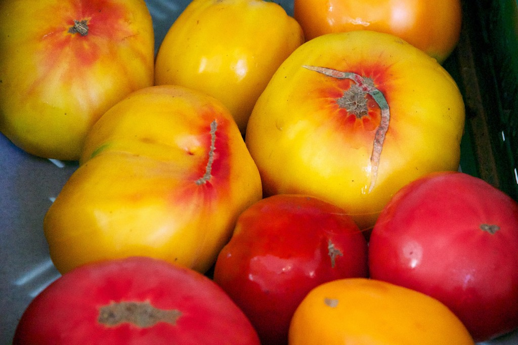 Tomaten_Historische